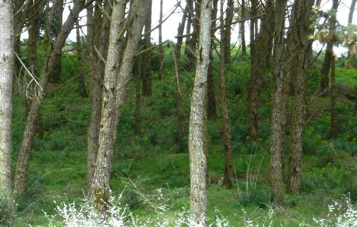 bosco-alcamo-2
