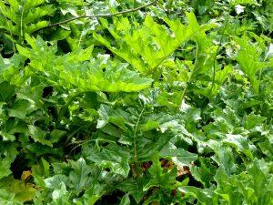 bosco-alcamo-4