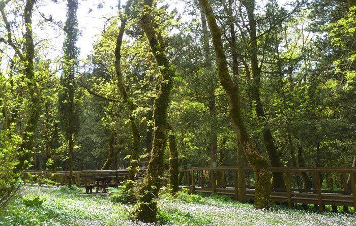 bosco-alcamo-8