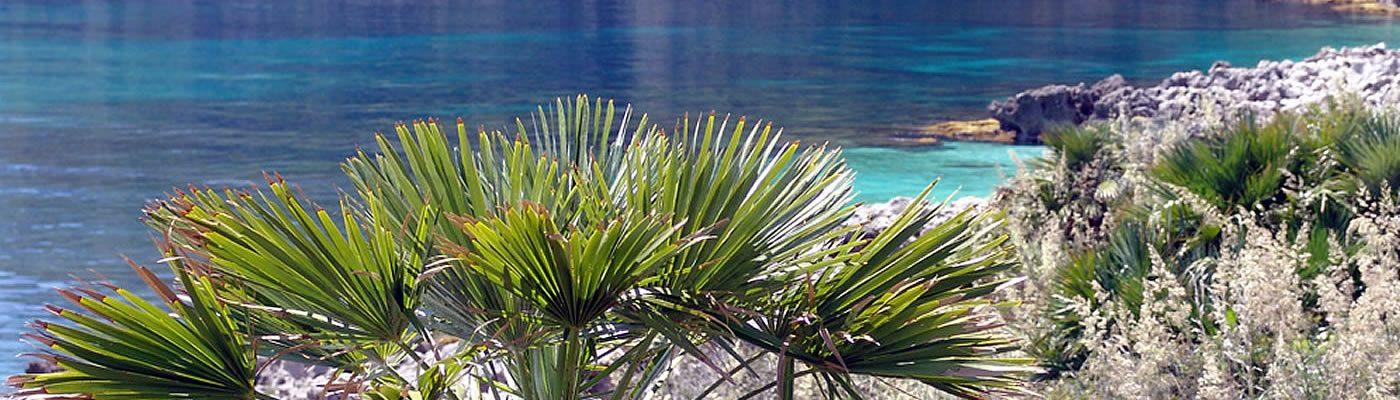 Turismo Trapani | Prenota la tua vacanza a Trapani |